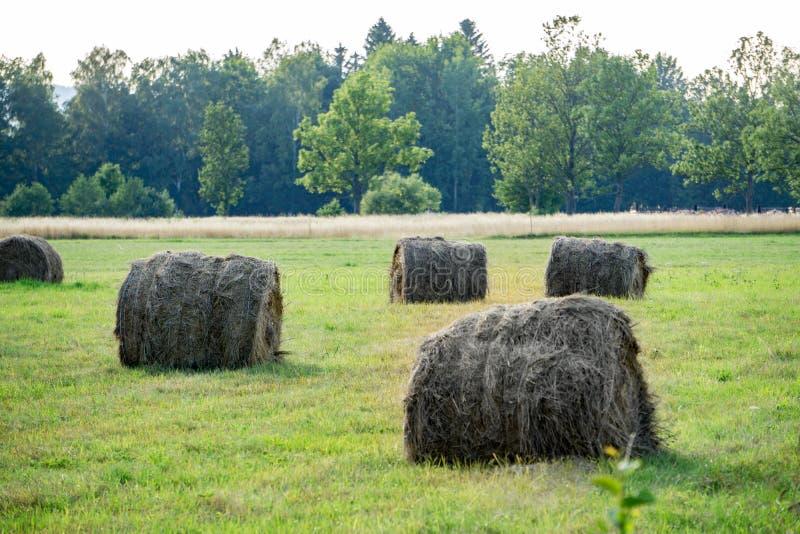 Zbieracki siano w złotym polu, round siano bele, rolnictwo, gospodarstwo rolne, bydło karmi, wiejski krajobraz fotografia royalty free