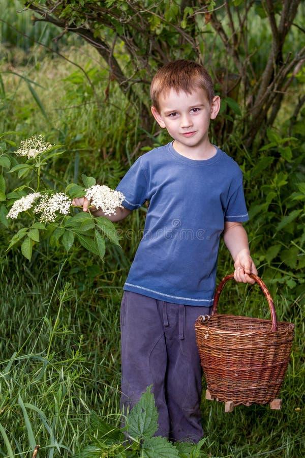 Zbieracki starszej osoby okwitnięcia kwiat fotografia royalty free
