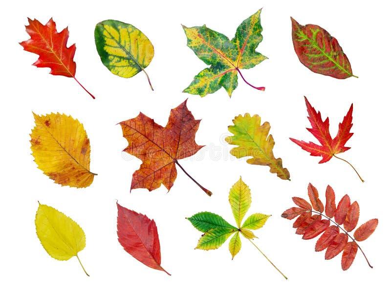 zbierania liści jesienią fotografia stock