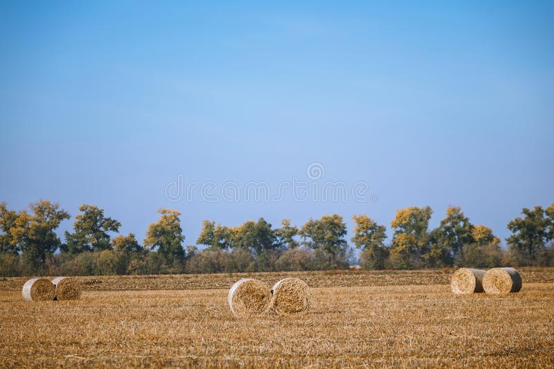 Zbieranie kaucji w cudownym, jesiennym krajobrazie rolniczym ze stosami siana fotografia stock