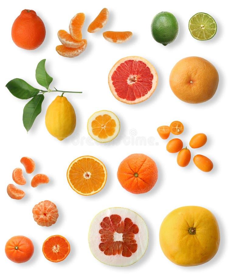 zbieranie owoców cytrusowych obraz stock