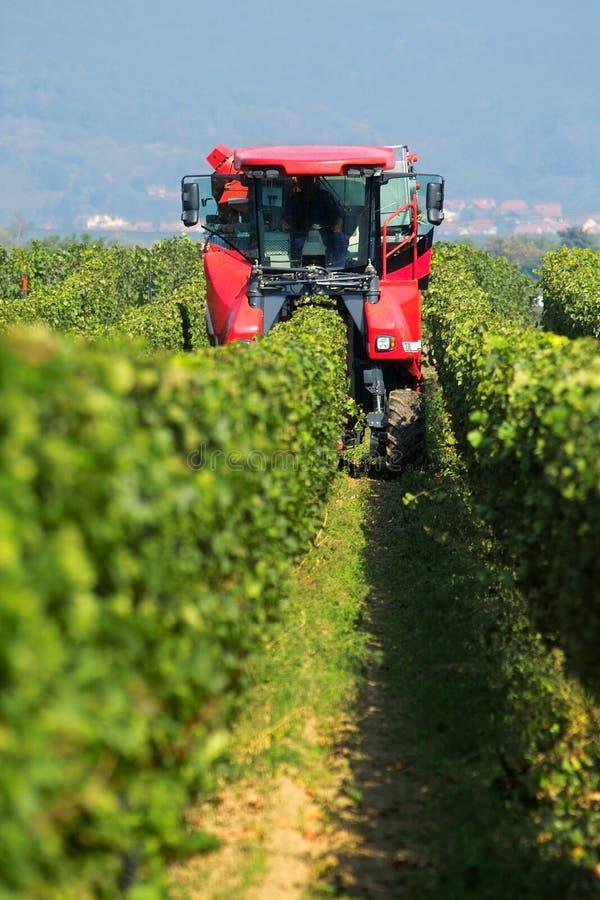 zbieranie winogron zdjęcie stock