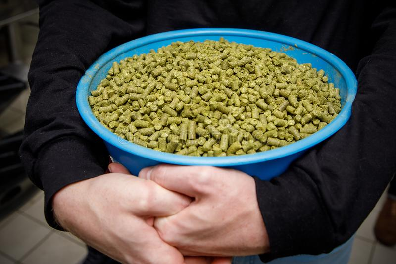 Zbiornik z granulowanym podskakuje w rękach piwowar Składnik dla piwa zdjęcia royalty free