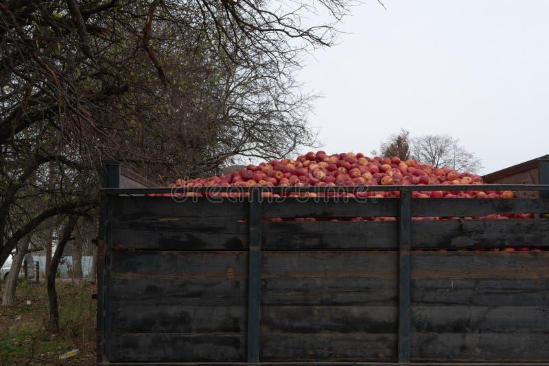 Zbliżenie plecy ciężarowa ciężarówka pełno jabłka obrazy stock
