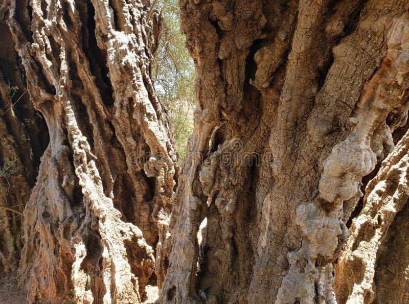 zbliża się stary drzewny bagażnik, tło i tekstura, obraz stock