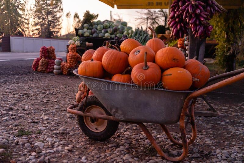 Zbliżanie się do pałacu z pomarańczowymi dyniami do sprzedaży Szczegółowe informacje o rynku drogowym Targoviste, Rumunia, 2019 obraz royalty free