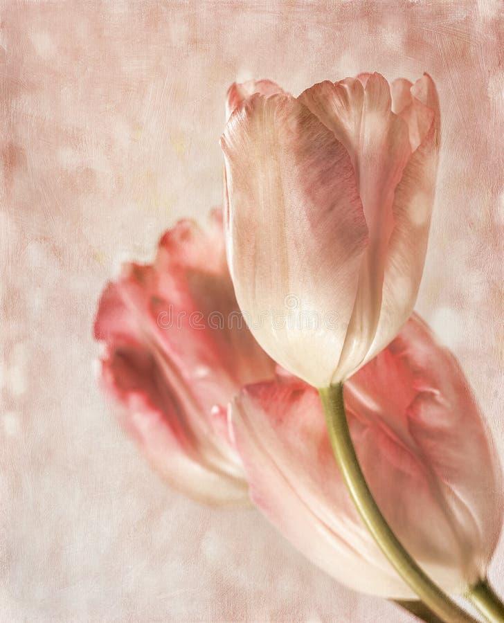 zbliżenia czuciowy tulipanów rocznik ilustracji