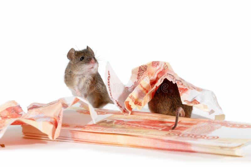Zbliżenia dwa mysz blisko papierowej waluty i stos gotówka na białym tle obraz stock