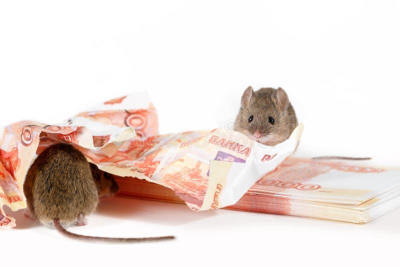 Zbliżenia dwa mysz na stosie gotówka na białym tle pojęcie deprecjacja waluta zdjęcie stock