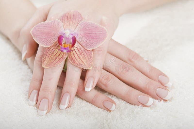 Zbliżenia wizerunek piękni gwoździe i kobiety palce zdjęcie stock