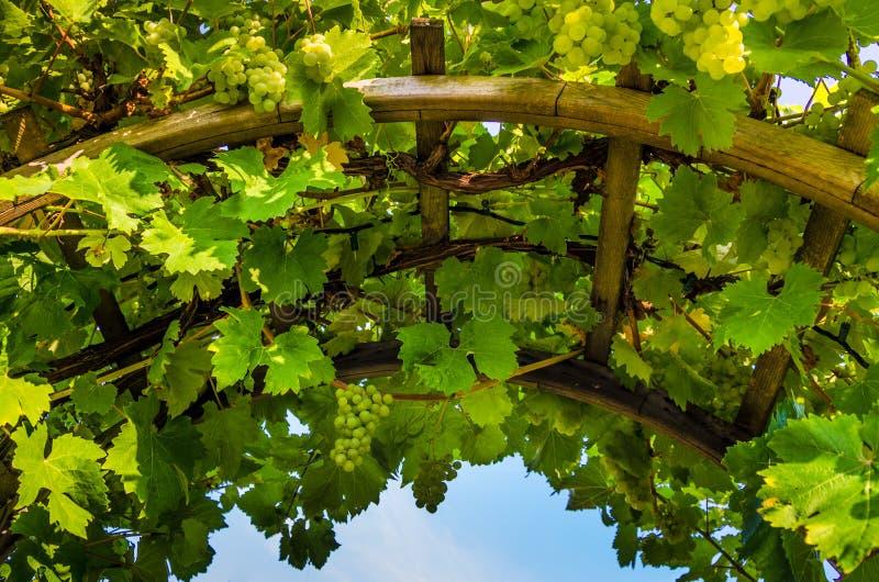 Zbliżenie łuk z winogradami i winogronami zdjęcie stock