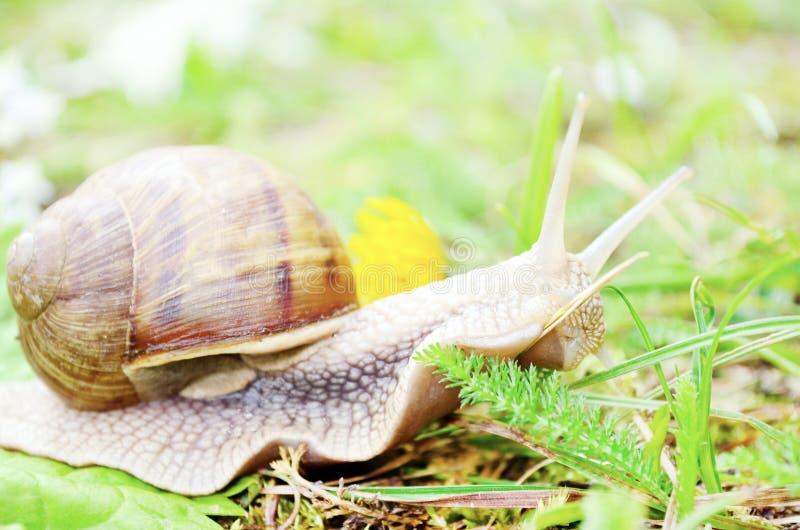 Zbliżenie ślimaczek w lesie zdjęcia stock