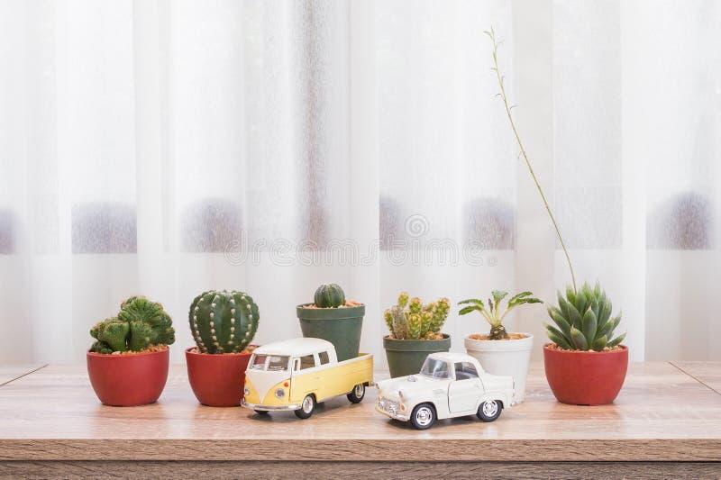 Zbliżenie świeży zielony kaktus w plastikowym garnku dla dekoruje z clas zdjęcie stock