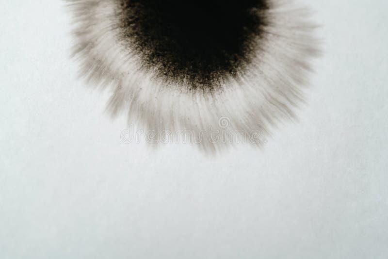 Zbliżenie atramentu kąta czarny podesłanie na mokrym papierowym kąta widoku fotografia royalty free