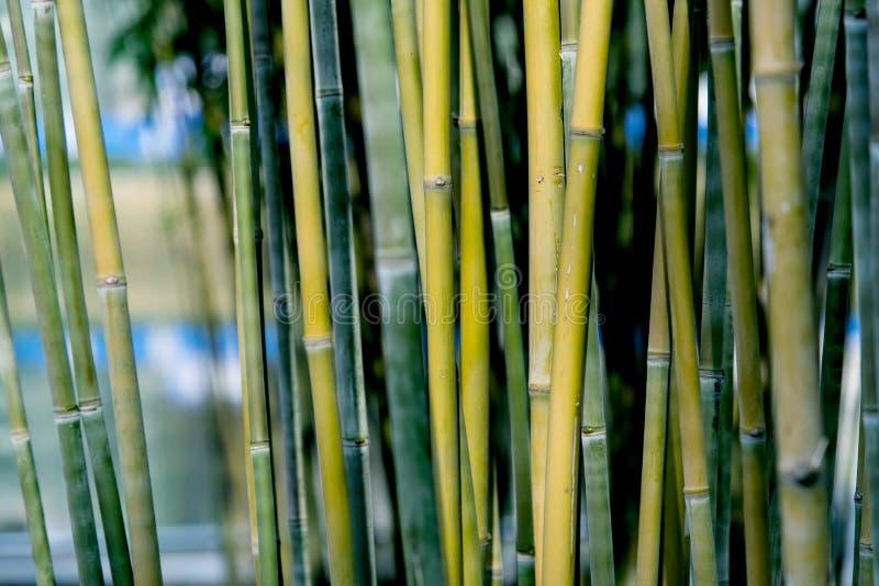 Zbliżenie bambusowy tło fotografia royalty free