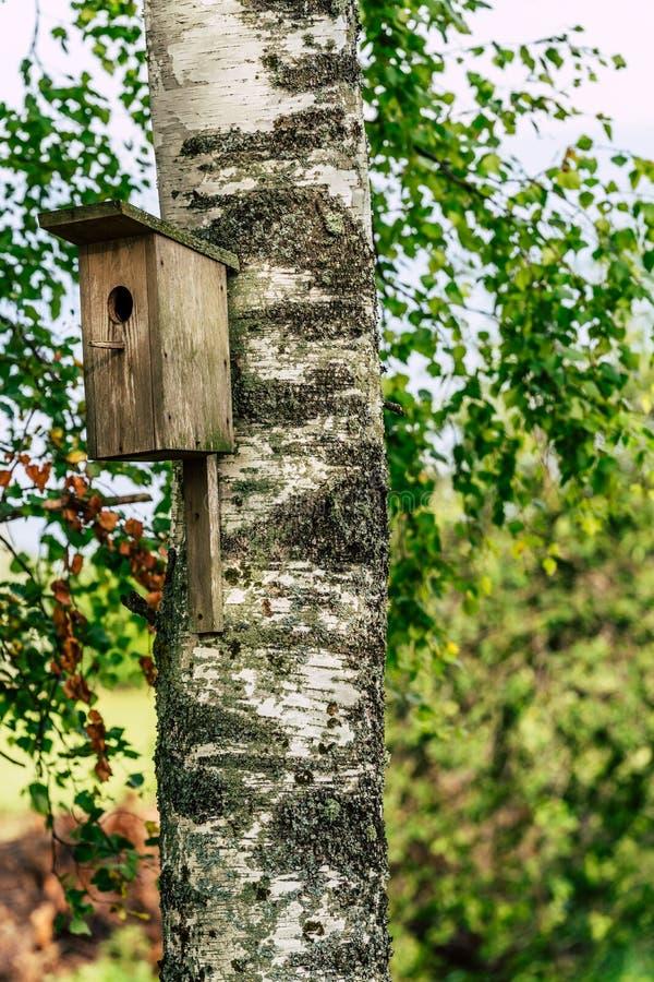 Zbliżenie Birdhouse na brzozy drzewie na Wczesnym Pogodnym wiosna dniu zdjęcie royalty free
