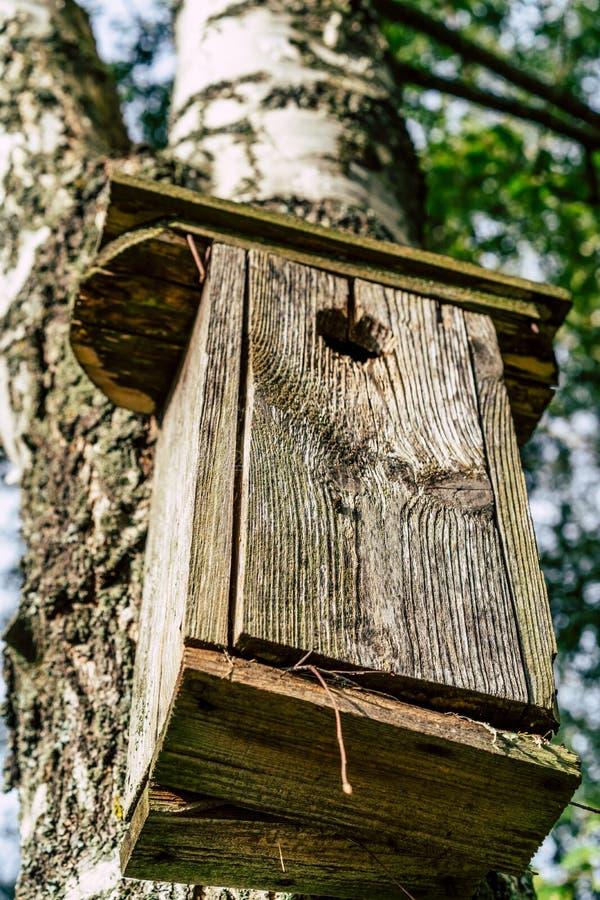 Zbliżenie Birdhouse na brzozy drzewie na Wczesnym Pogodnym wiosna dniu zdjęcia royalty free