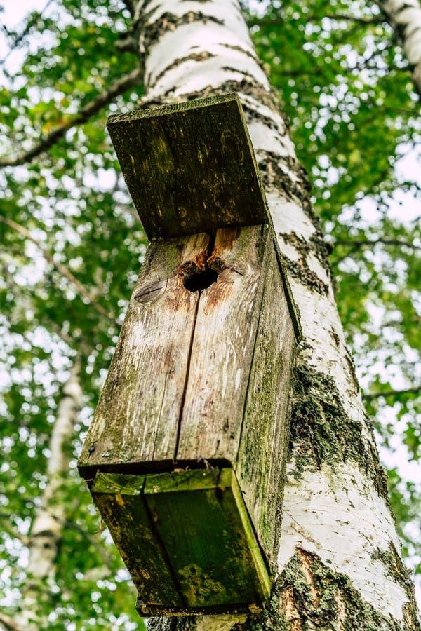 Zbliżenie Birdhouse na brzozy drzewie na Wczesnym Pogodnym wiosna dniu fotografia royalty free