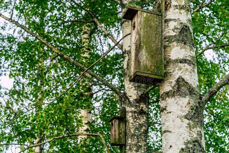 Zbliżenie Birdhouse na brzozy drzewie na Wczesnym Pogodnym wiosna dniu obrazy royalty free