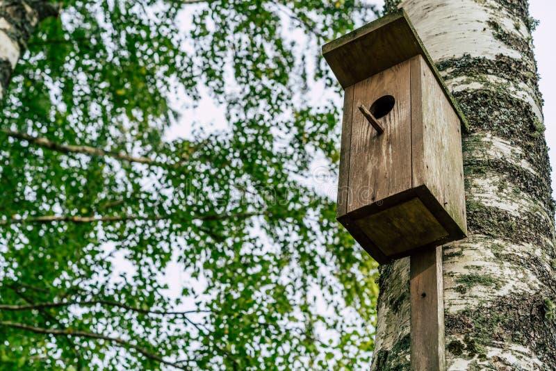 Zbliżenie Birdhouse na brzozy drzewie na Wczesnym Pogodnym wiosna dniu obrazy stock