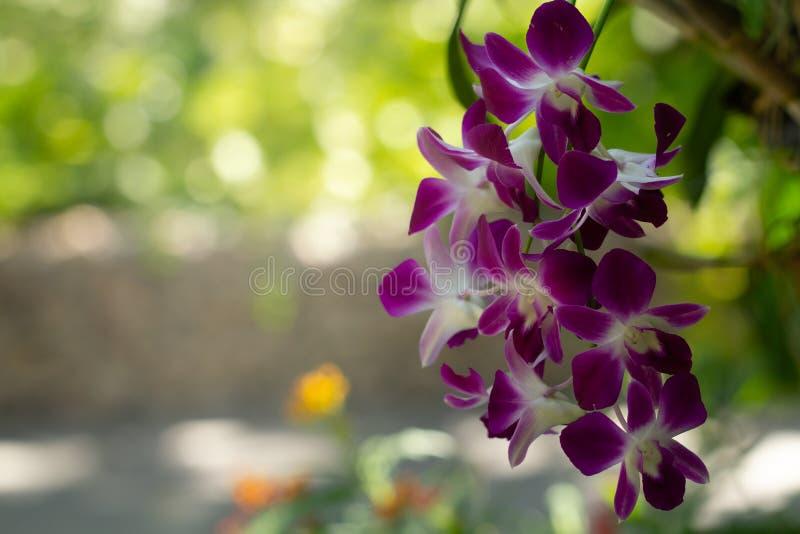 Zbliżenie bukiet purpurowy storczykowy kwiat na piękna bokeh tle obraz stock