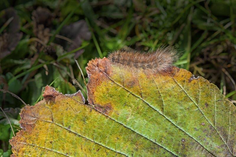 Zbliżenie Caterpillar fotografia stock