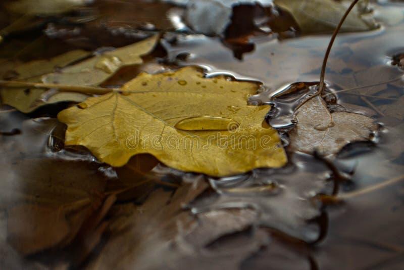 Zbliżenie deszczu kropla na liściach zdjęcie royalty free
