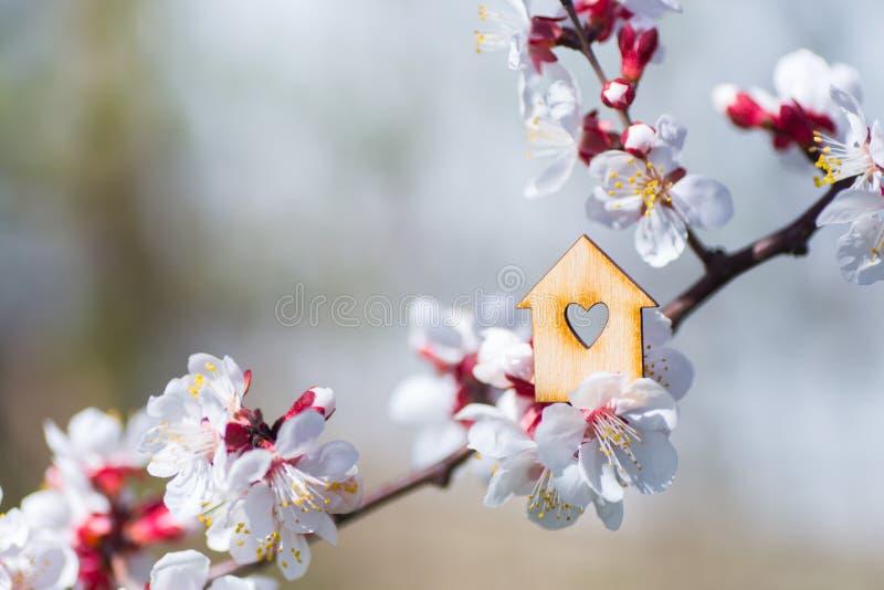 Zbliżenie drewniany dom z dziurą w formie otaczającej biały kwiecenie gałąź wiosna drzewa serce zdjęcia stock