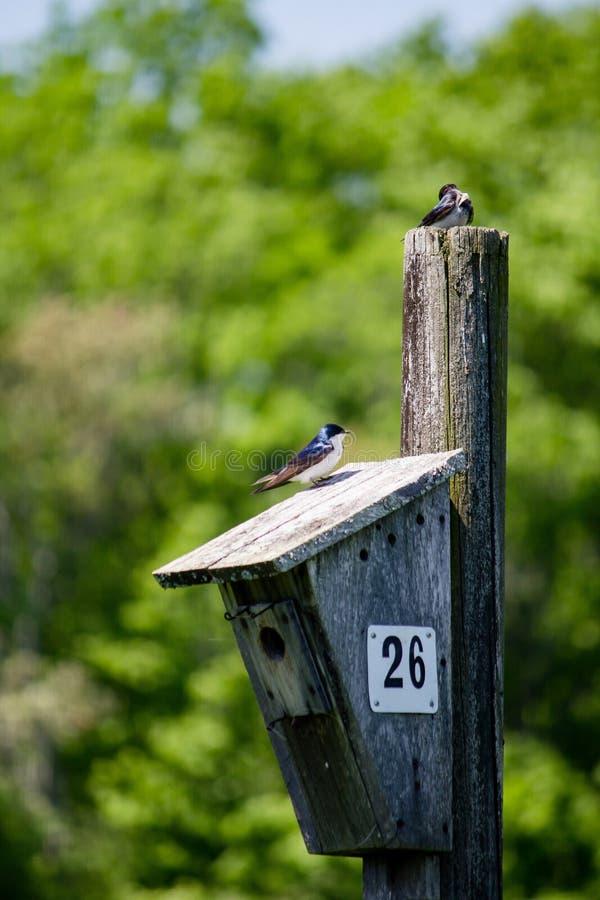 Zbliżenie drewniany ptaka gniazdeczko i ptasi obsiadanie na górze go z zamazanym naturalnym tłem zdjęcie royalty free