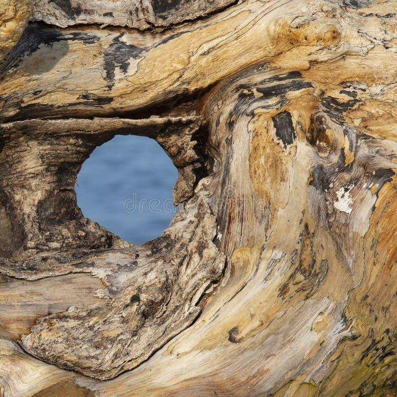 Zbliżenie driftwood na brzeg Jeziorny Huron obrazy royalty free