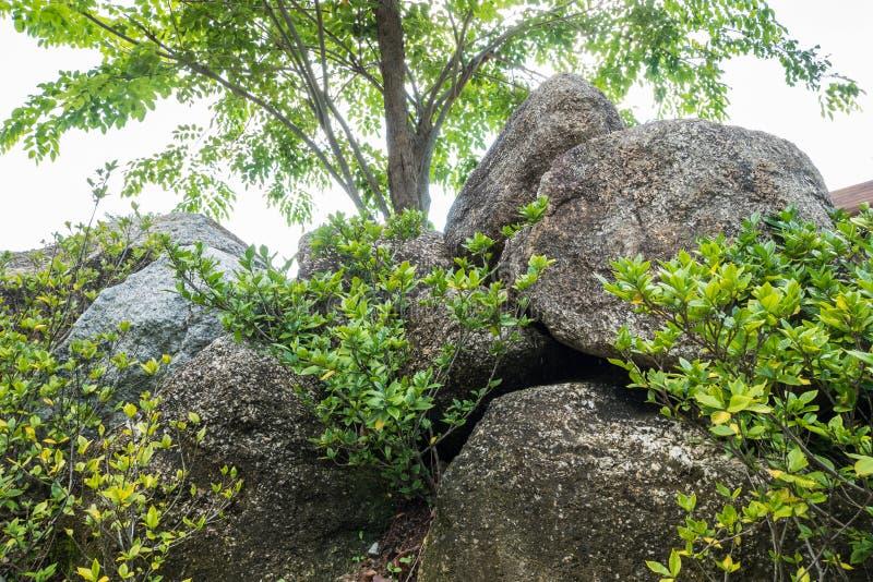Zbliżenie grupa duża skała dla dekoruje z zieloną rośliną w ogrodowym tekstury tle w popołudniu fotografia royalty free