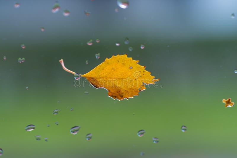Zbliżenie jesiennego liścia obrazy stock