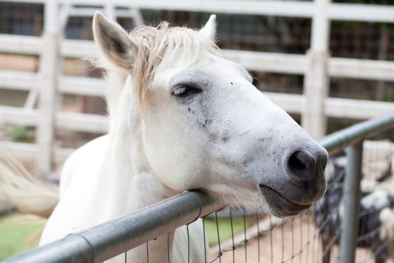 Download Zbliżenie końska głowa obraz stock. Obraz złożonej z rzęsy - 53783191