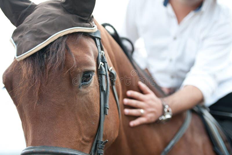 Zbliżenie końska głowa z szczegółem na oku na jeździec ręce i. sprzężny koń jest prowadzeniem - zakończenie szczegóły up.  ogiera  obraz stock