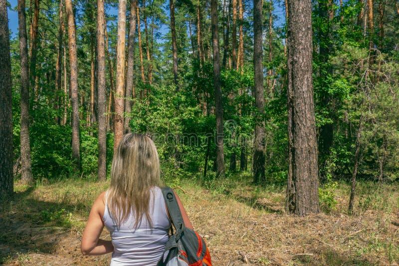 Zbliżenie kobieta z plecakiem przed jodły, sosen lasowym pojęciem i, fotografia royalty free