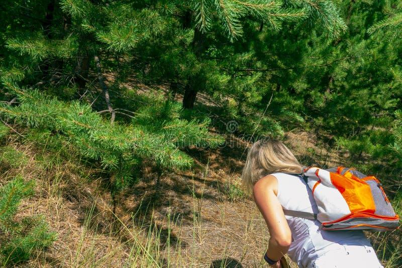 Zbliżenie kobieta z plecakiem przed jodły, sosen lasowym pojęciem i, obraz royalty free