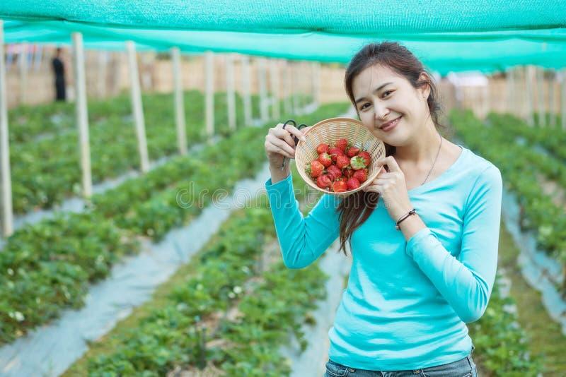 Zbliżenie kobiety azjatykciego przedstawienia truskawkowa owoc w drewnianym koszu w truskawki gospodarstwie rolnym fotografia stock