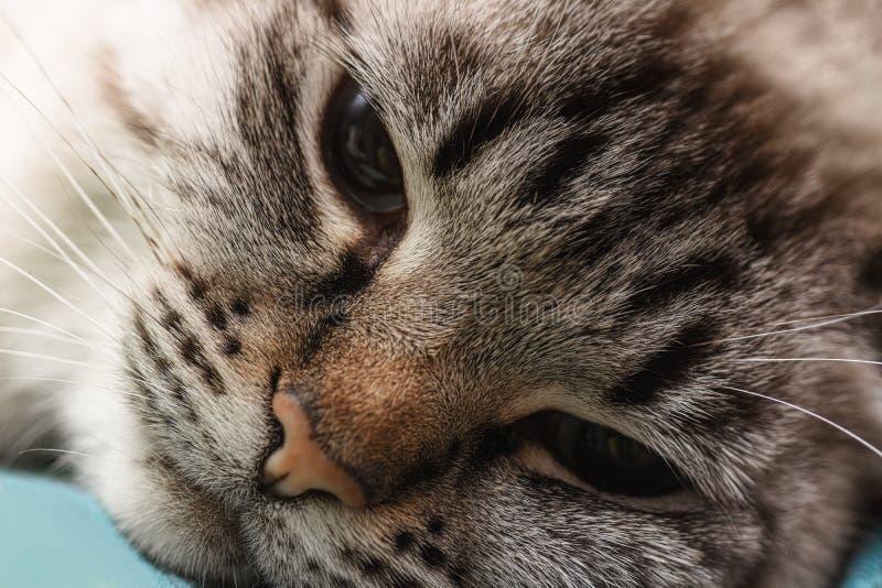 Zbliżenie kota lying on the beach na łóżku i patrzeć smutny zdjęcie royalty free