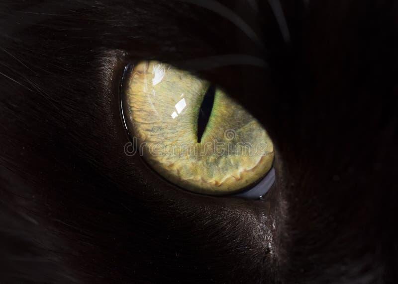 Zbliżenie kota oko obrazy royalty free