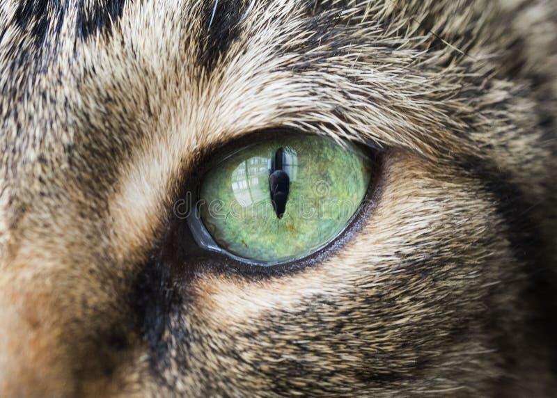 Zbliżenie kota oko fotografia stock