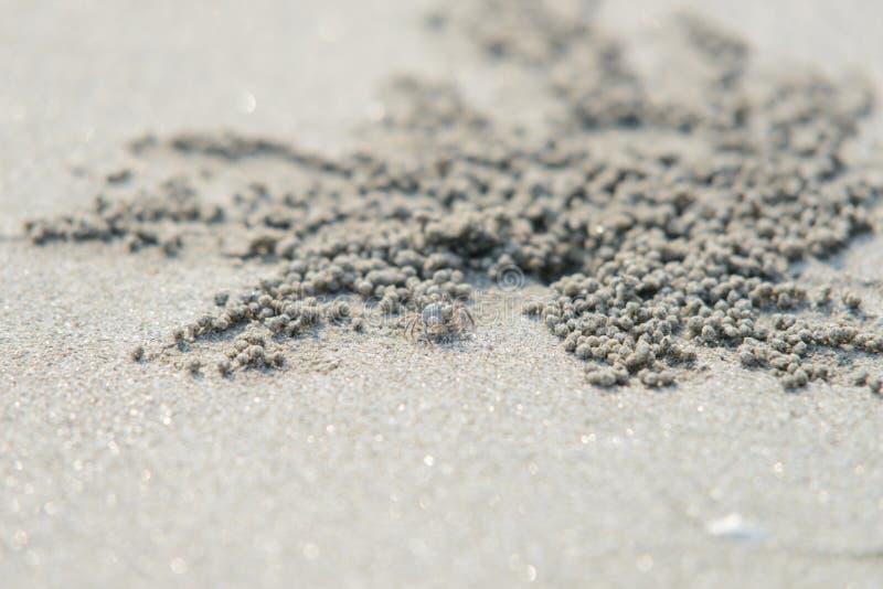 Zbliżenie krab blisko piaska bubbler kraba dziury fotografia stock