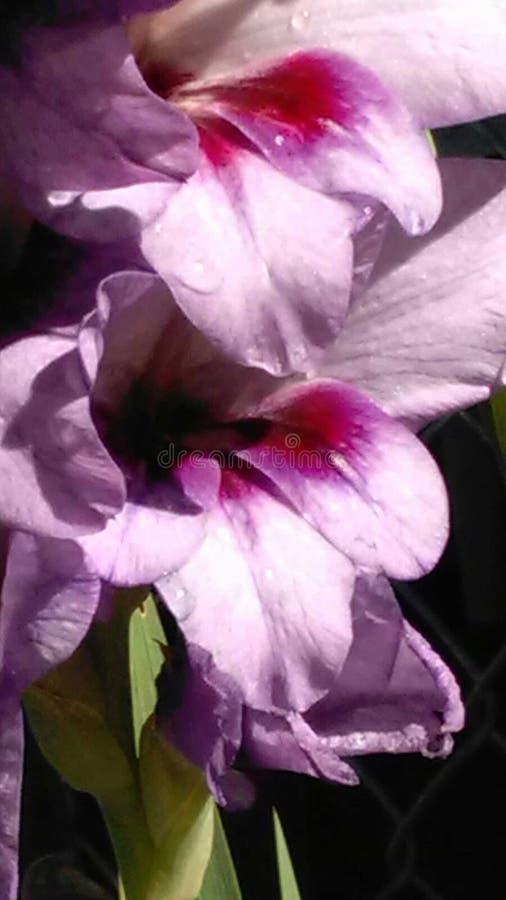 Zbliżenie kwiaty fotografia stock