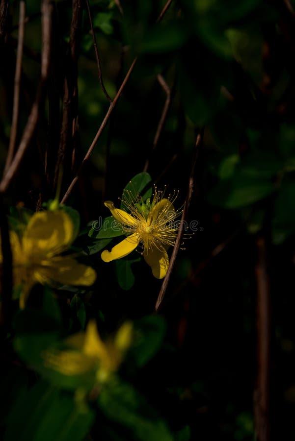 Zbliżenie kwitnąć lato kwiaty obraz royalty free