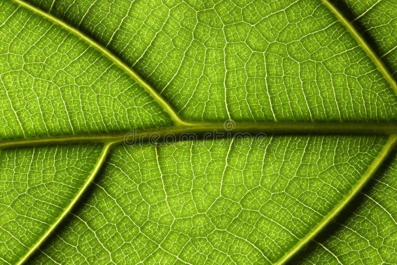 zbliżenie liści tropikalna roślinnych fotografia royalty free