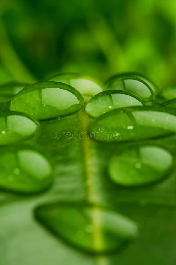 zbliżenie liści wody zdjęcie stock