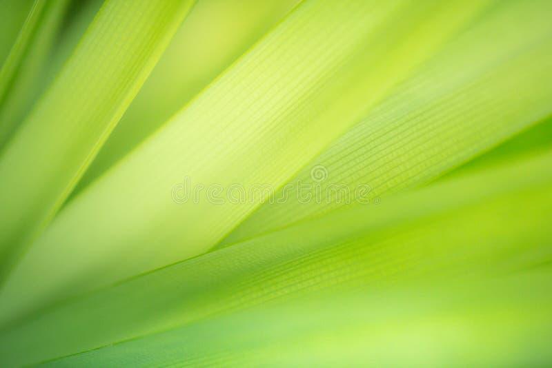 Zbliżenie liścia tekstury zielony tło dla natury i świeżości tapety pojęcia fotografia stock