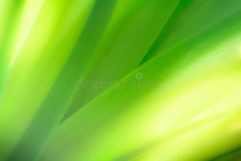 Zbliżenie liścia tekstury zielony tło dla natury i świeżości fotografia royalty free
