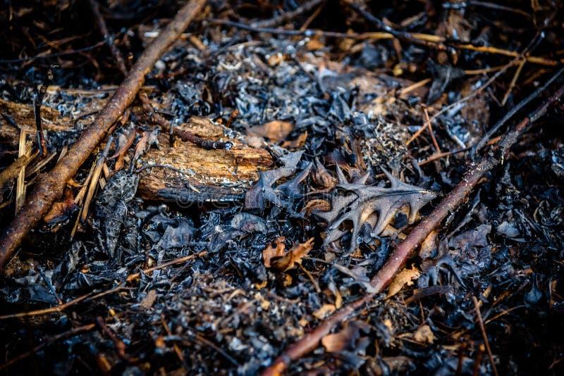 Zbliżenie liście i kije na ziemi po pożaru lasu obraz stock