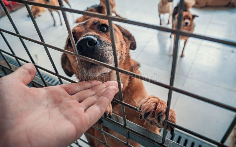 Zbliżenie męskiej dłoni w schronisku dla psów w klatce Ludzie, Zwierzęta, Wolontariat I Pomaganie W Koncepcji zdjęcie stock