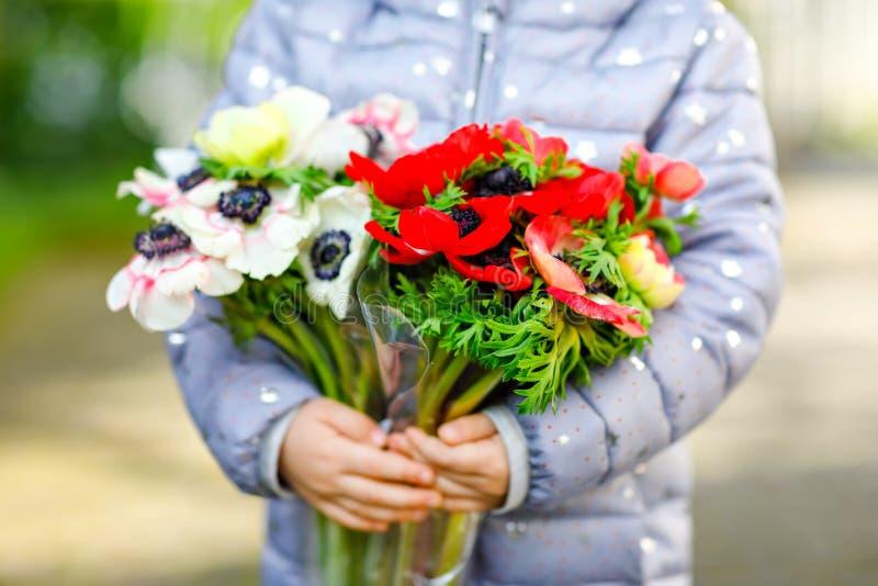 Zbliżenie małego berbecia dziewczyny urocze ręki z czerwonymi i białymi ranunculus kwiatami w wiosna ogródzie blisko do dziecka obrazy royalty free